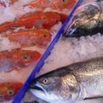 Fish-300x225